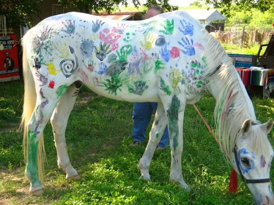 Native America Today | Oklahoma's Choctaw Horses Connect to